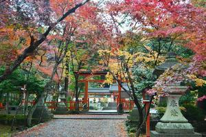 大原野神社の紅葉特集 ~光り輝く紅葉のトンネル|MKタクシー