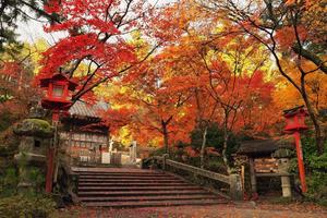 鍬山神社の紅葉特集 ~亀岡を代表する紅葉スポット|MKタクシー