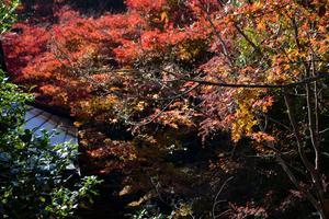 厭離庵/落柿舎の紅葉特集 ~散紅葉が魅力の紅葉期限定の特別公開寺院|MKタクシー