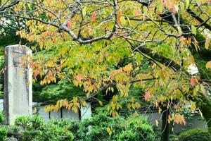 養源院の紅葉特集 ~光り輝く美しい紅葉に彩られる参道|MKタクシー