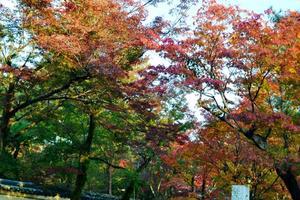 宝厳院の紅葉特集 ~21世紀に再興され今も整備が進む行列必至の庭園|MKタクシー