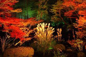 天授庵の紅葉特集 ~枯山水と池泉の2つの庭を楽しめる元穴場スポット|MKタクシー
