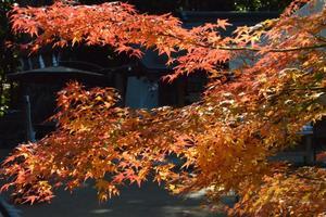 宇治上神社/朝霧通の紅葉特集 ~最もマイナーな世界遺産の美しい参道|MKタクシー