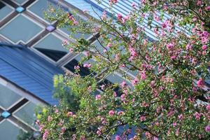 梅小路公園の百日紅(サルスベリ)特集 ~サルスベリがメインの「朱雀の庭」|MKタクシー