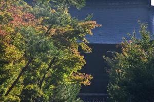 天龍寺の紅葉特集 ~前庭だけでも見ごたえ十分|MKタクシー