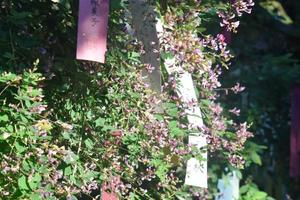 梨木神社の萩(ハギ)特集 ~「萩の宮」と称される京都一の萩の名所|MKタクシー