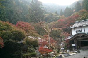 阿弥陀寺(古知谷)の紅葉特集 ~天然記念物指定のカエデの巨樹|MKタクシー
