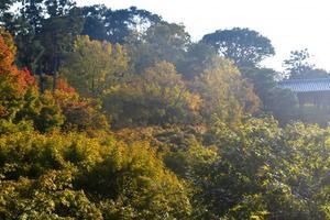 東福寺・通天橋の紅葉特集 ~渓谷を埋め尽くす紅葉は、京都の秋の顔|MKタクシー