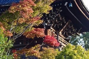 清凉寺の紅葉特集 ~嵯峨野・嵐山のど真ん中にある寺院|MKタクシー