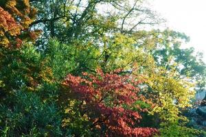 西大谷の紅葉特集 ~眼鏡橋の周囲を彩るパッチワーク状の紅葉|MKタクシー